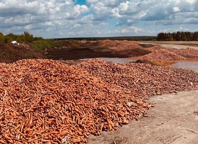 Под Гостомелем обнаружили горы моркови: фото и видео